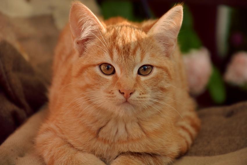 壁纸 动物 猫 猫咪 小猫 桌面 850_567