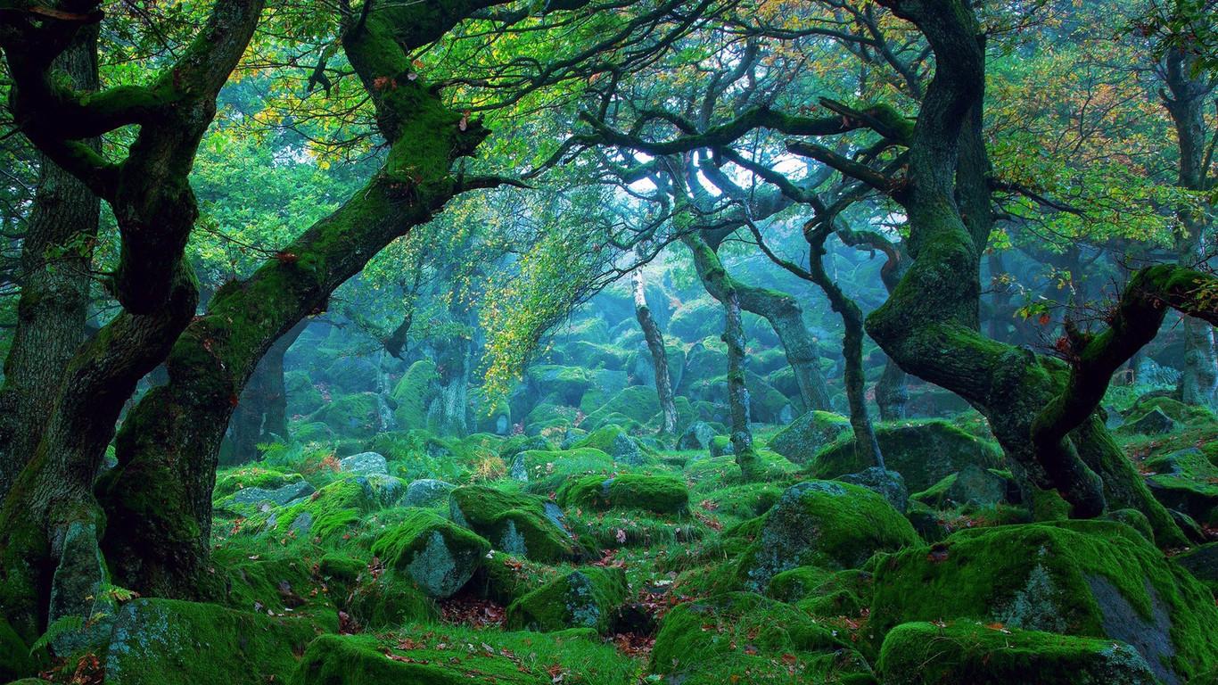 壁纸 风景 森林 桌面 1366_768