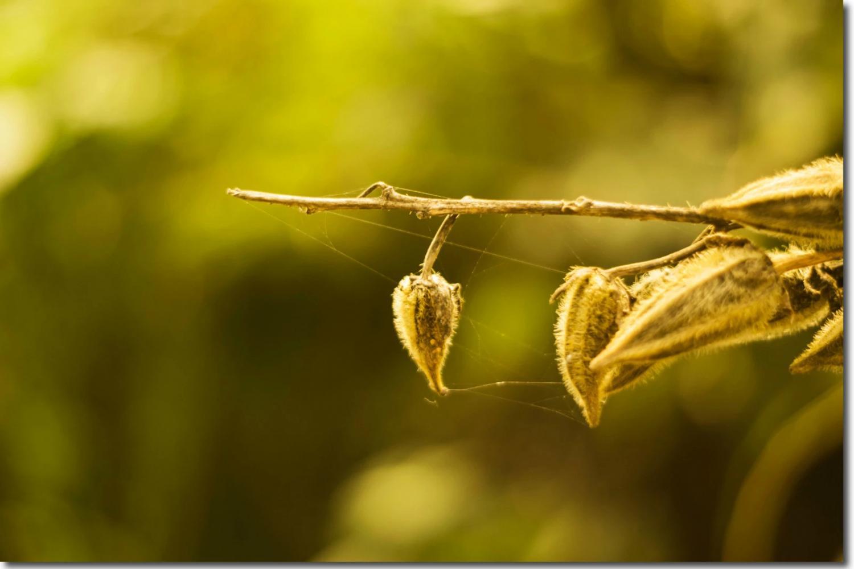 人生一世,草木一秋