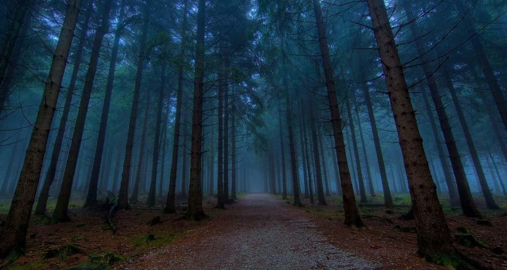 我在小树林等你-摄影天地-flyme社区