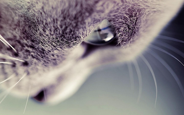 萌系动物壁纸桌面【10p】