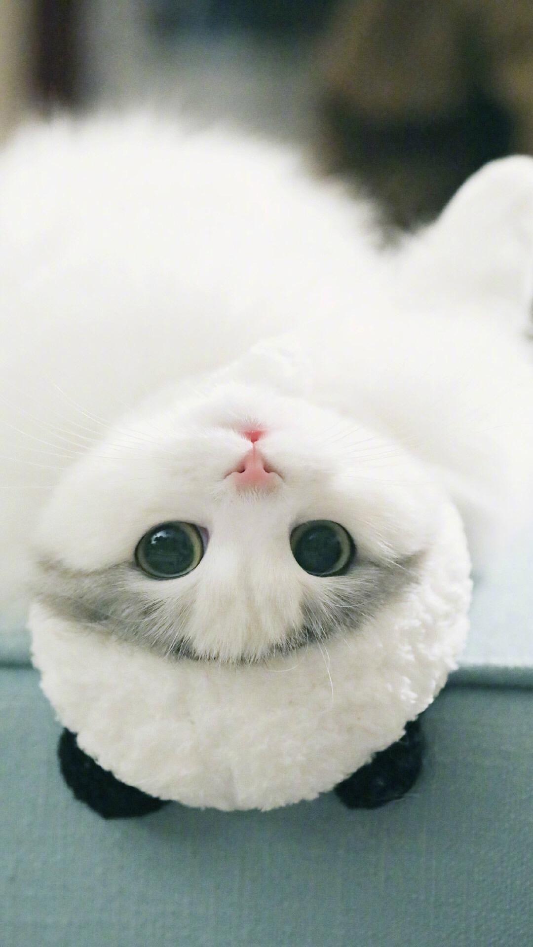 「资源组」萌萌可爱的小猫咪【9p】