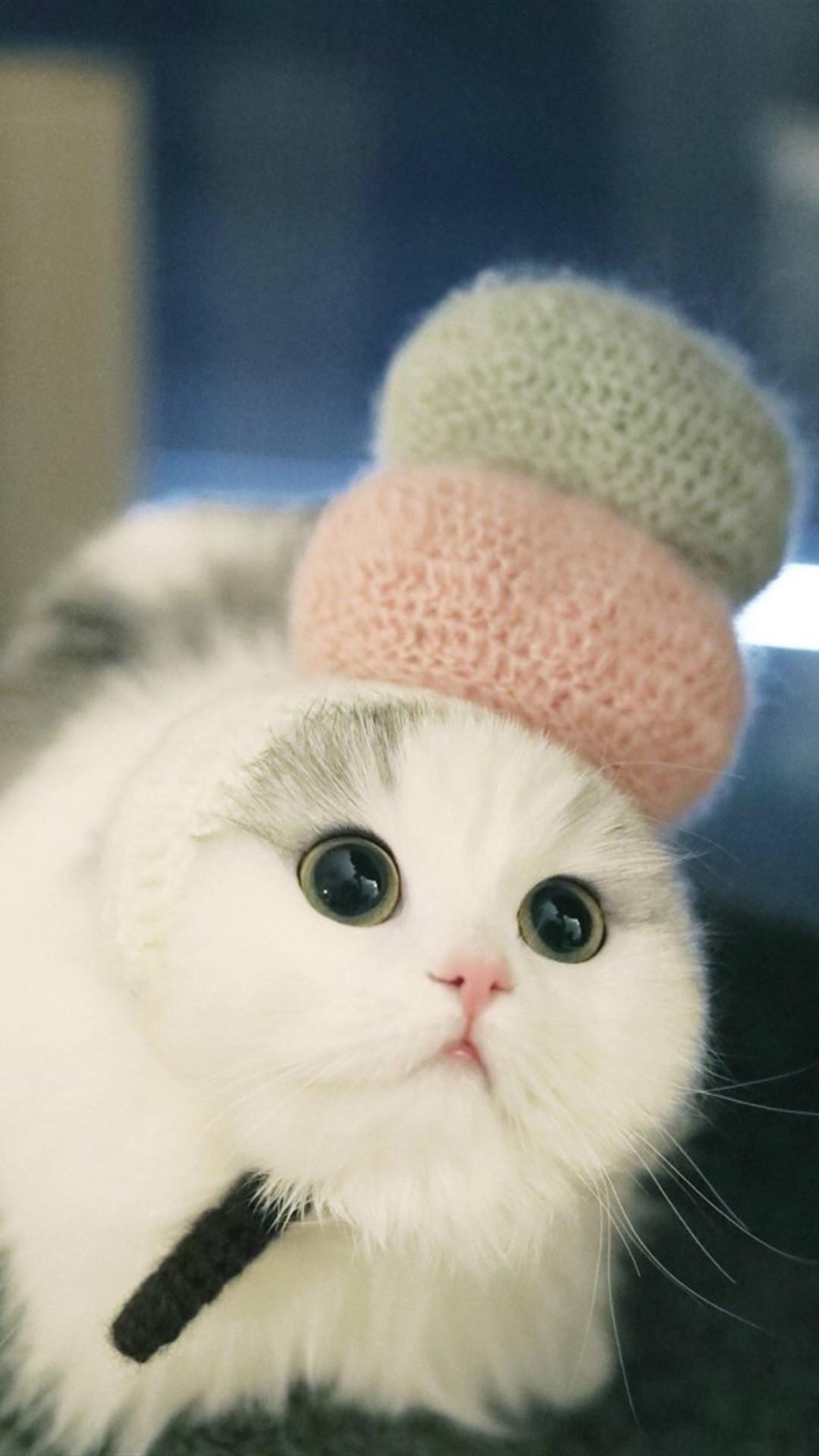 资源分享 主题壁纸 「资源组」可爱萌宠猫咪【8p】 发帖 回复