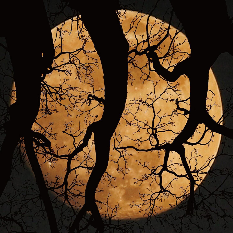 PicsArt_01-04-11.23.07(1).jpg