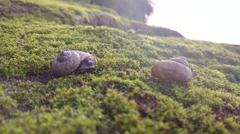 长江岸边的小蜗牛